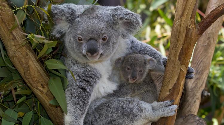 San-Diego-Zoo-Australian-Outback-Courtesy-San-Diego-Zoo.png